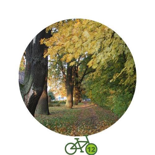 Punkt12 am Zweistromweg Allee am Tiergarten mit Herbstlaub
